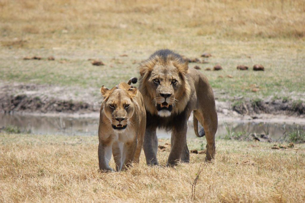 Jungle Safari in Africa
